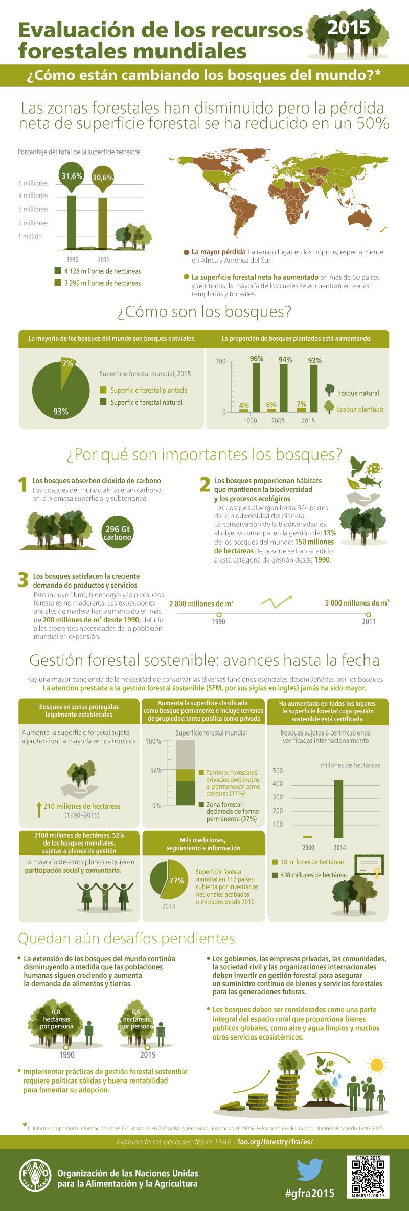 La deforestación se ralentiza a nivel mundial según la FAO, con más bosques mejor gestionados