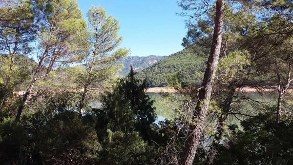 Licitado el segundo lote de actuaciones forestales en Andalucía